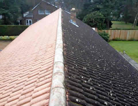 roof moss removal East Sussex